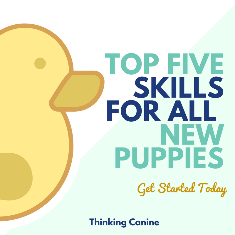 Top 5 Skills For New Puppies