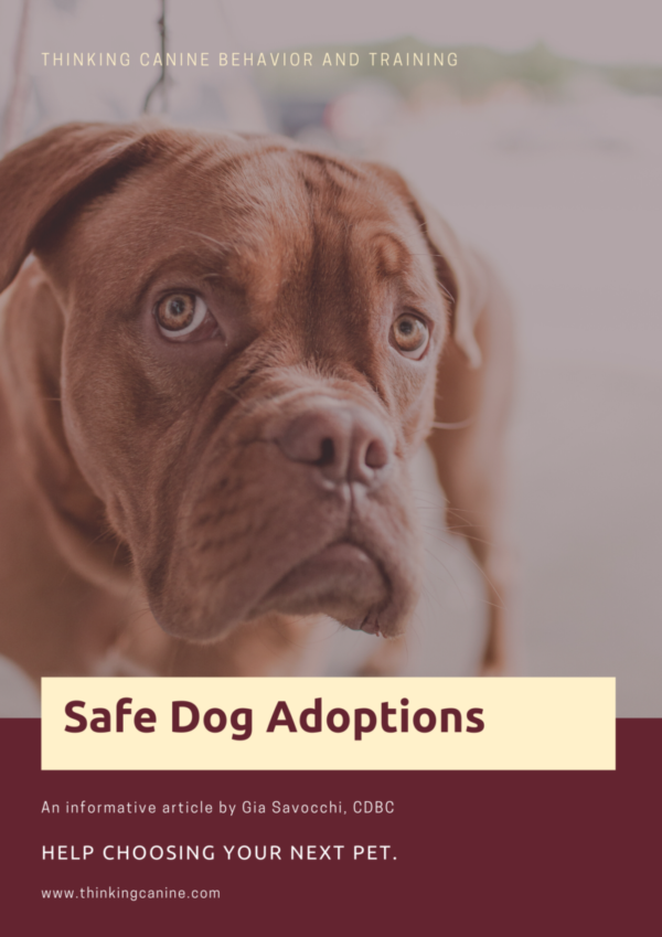 Maroon Beige Dog Photo Homelessness Poster
